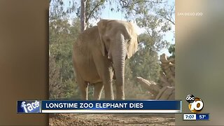 San Diego Zoo announces death of beloved elephant