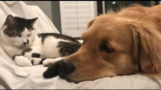 Dog and cat form adorable friendship