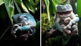 Gruesome Footage Shows How Frog Sheds Its Skin By Eating It