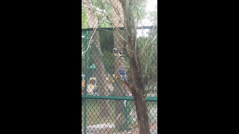 Cutest Blue Jays Having Deep Conversation