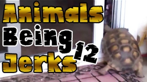 Animals Being Jerks #12