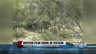 British film crew recording video of javelina in Tucson for wildlife documentary - Video