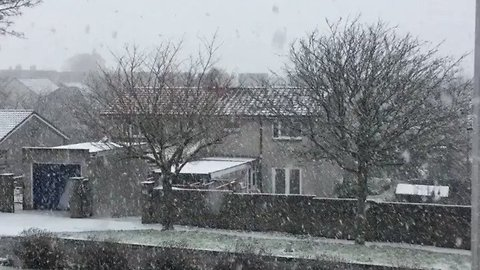 Dundee Garden Gets Covered in Snow