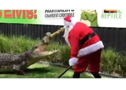 Santa Claus Feeds Feisty Crocodiles at Australian Reptile Park - Video