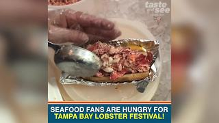 Seafood fans are hungry for Tampa Bay Lobster Festival | Taste and See Tampa Bay - Video