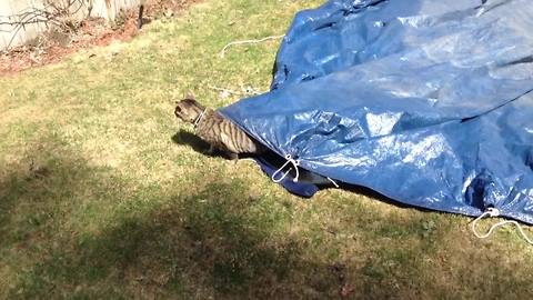 Funny Cat Crawls Under A Tarp And Walks Around