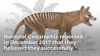 Scientists Defeat Extinction, Bringing Species Back to Life - Video