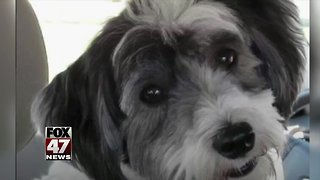 Pretrial date set in deadly dog attack