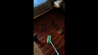 Cute kittens totally mesmerized by sweeper