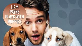 All the times Liam Payne was cuter than puppies - Video