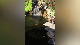 Ever See A Dog This Excited To Feed Fish? - Video