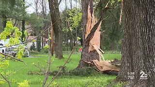 Storm levels trees in Carroll County