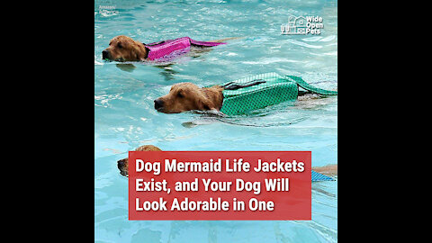 Dog Mermaid Life Jackets Exist, and Your Dog Will Look Adorable in One