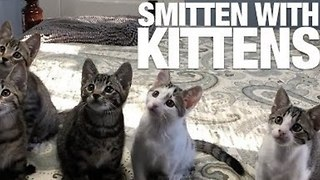 Adorable Kittens to Brighten Up Your Day