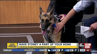 Rescues in Action June 8 | Share your home with Sydney