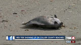 Red tide reaches Collier beaches
