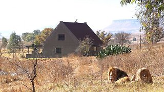 Where the lion sleeps tonight! Live like a real Lion King in cottage where you are less than a metre from big cats