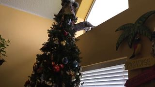10 Reasons To Keep Your Cat Away From The Christmas Tree - Video