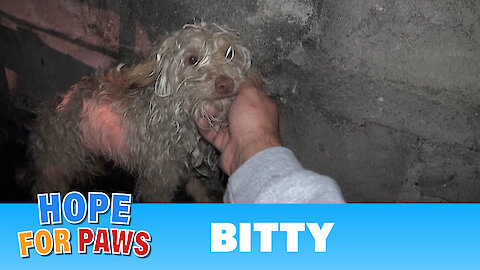 Saving Bitty: a scared homeless dog hidden in a sewer tunnel - a must see!