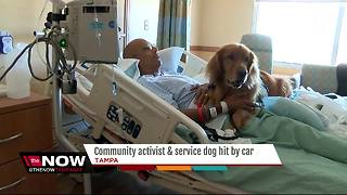Community activist and service dog hit by car - Video