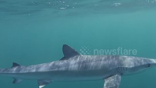 Snorkelers have close encounter with shark in Cornwall, UK - Video