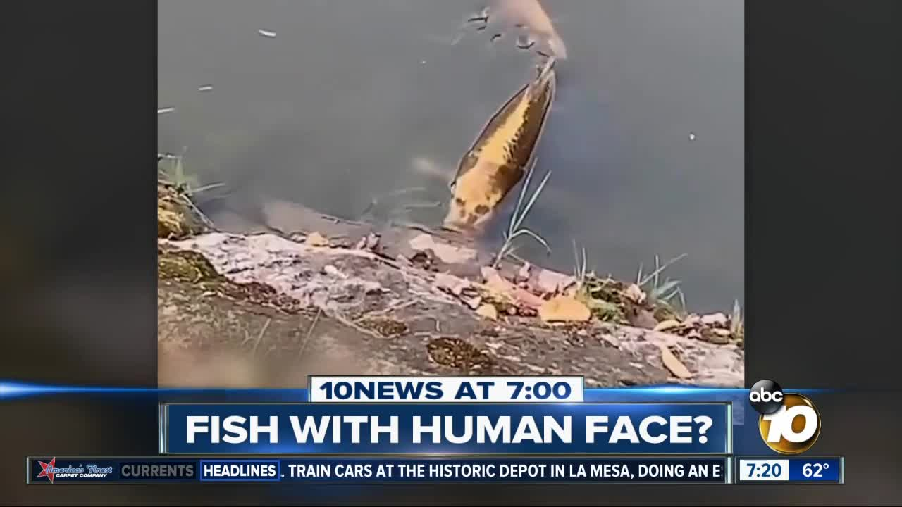 Video shows fish with human-like face?