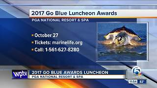 2017 Go Blue Luncheon Awards on Oct. 27 - Video