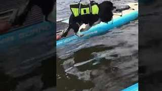 Paddle-Boarding Pooch Tries to Swim in Mid-Air