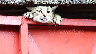 Cat rescued after getting head stuck in garage door - Video