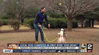 Local dog competes in Dog Bowl - Video