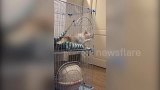 Guilty cat spotted by owner trying to break out of cage - Video