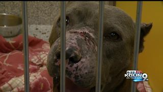 Two dogs found malnourished, injured - Video