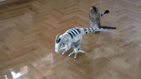 Playful kitten takes on remote control dinosaur