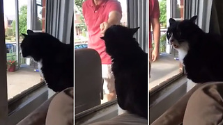 Kitty Finds Out She'll Share The House With Pooch, Has A Meltdown  - Video