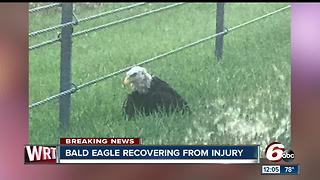 Injured bald eagle found along I-70 in Hancock County - Video
