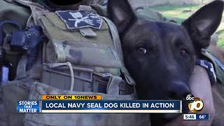 Local Navy SEAL dog killed in action - Video