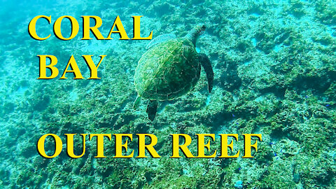 Coral Bay outer reef - Ep 21