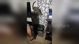 Hilarious moment kitten falls into bin