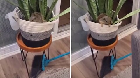 Couple return home to find wild squirrel in their house