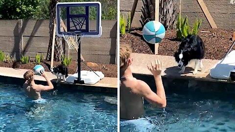 Energetic Aussie loves to play ball with his owner
