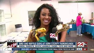 Exotic Bird and Reptile Expo at the Kern County Fairgrounds - Video