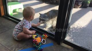 Baby meets raccoon for the first time