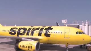 Woman considering suing Spirit Airlines after flushing hamster - Video