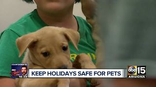 Keep your pets safe this holiday season! - Video