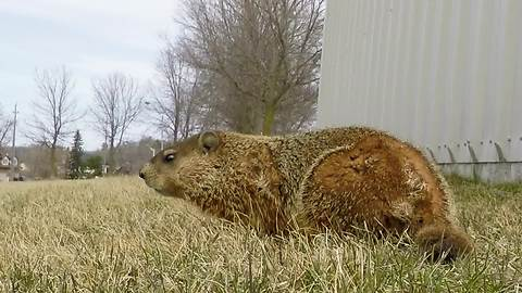 Hidden GoPro captures curious gopher's behavior