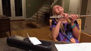Doggy Critic Disapproves Of Flute Playing - Video