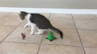 Cute Little Kitten Loves Playing Despite Suffering From Tremors - Video