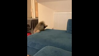 Playfully puppy totally falls off the couch