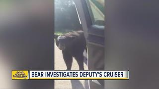 Deputy encounters bear in Marion Co. - Video