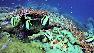 The beautiful and colorful underwater paradise of Papua New Guinea